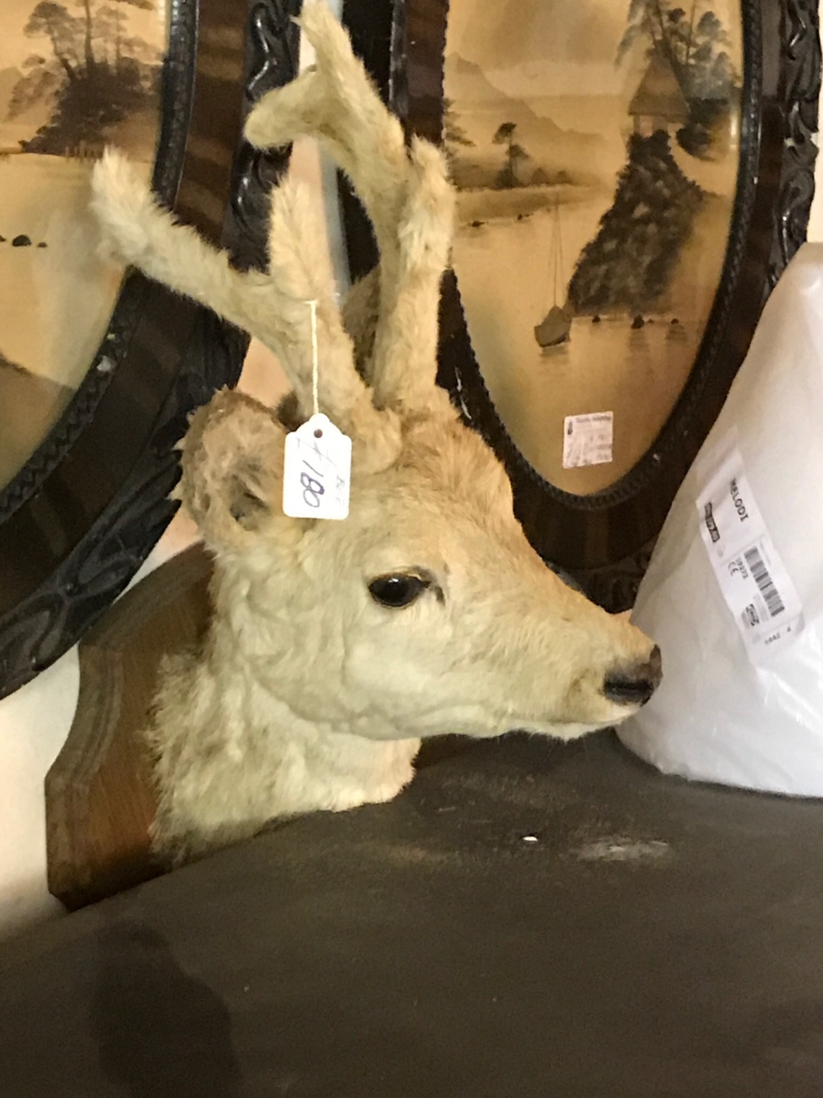 Taxidermy Young Deer (1 of 1)
