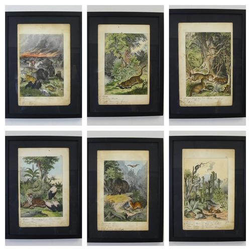 6 Framed Animal Coloured Pictures Plates C1877 Sketches from Nature - N America & Canada (1 of 12)