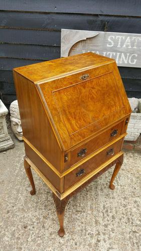 Lovely Antique Design Burr Walnut Bureau (1 of 9)