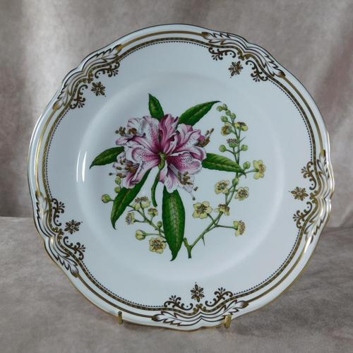 Stafford Flowers Pattern Plate by Spode (1 of 4)