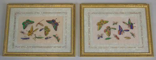 Fine Antique Pair of Chinese Paintings Butterflies & Insects on Pith (1 of 10)