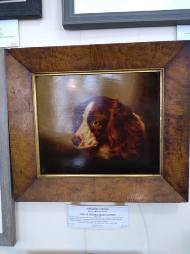 Portrait of a Spaniel (1 of 4)