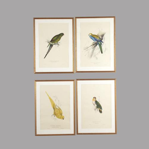Set of Four 19th Century Bird Lithographs by Edward Lear (1 of 5)