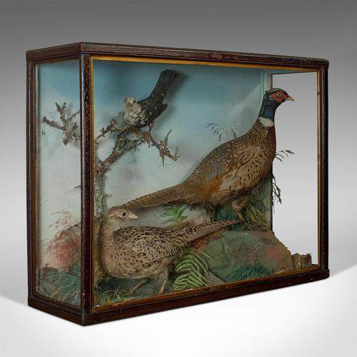Antique Taxidermy Scene, Birds, Pheasant, Blackbird, Display Case, Victorian (1 of 10)