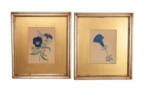 Two Flower Studies (1 of 6)