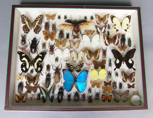 Large Antique Specimen Butterfly & Insect Case (1 of 7)