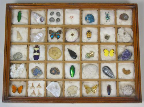 Antique Natural History Collectors Cabinet (1 of 8)