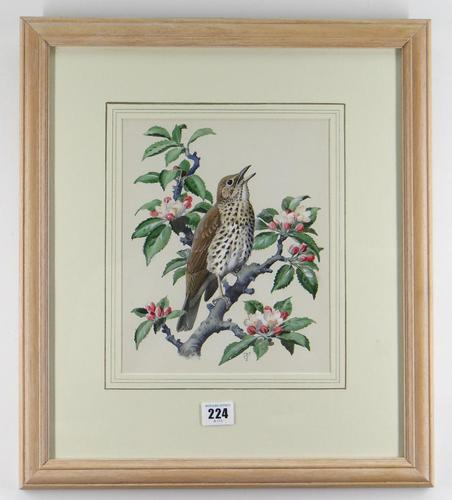 """Watercolour """"Chirping Song Thrush Bird"""" Signed Charles Frederick Tunnicliffe OBE RA 1901-1979 (1 of 35)"""