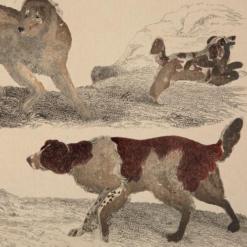Hand Coloured 'Working Dog' Lithograph. Goldsmith 1875 (1 of 4)