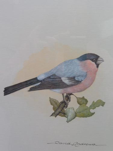 Watercolour Study of a Finch Listed Wildlife Artist David Andrews (1 of 10)