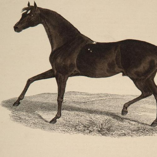 Hand Coloured 'Galloping Horse' Lithograph. Goldsmith 1875 (1 of 4)