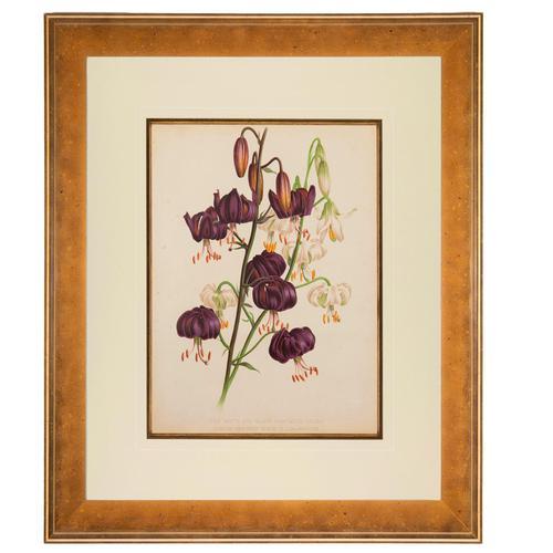 White & Black Martacon Lilies. Robinson. The Garden 1871-1881 (1 of 4)