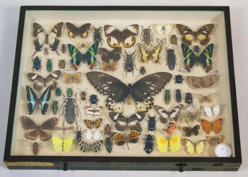 Antique Insect and Butterfly Specimens Collection (1 of 7)