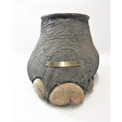Victorian Mahogany & Brass Mounted Rhino Foot Decanter Holder (1 of 8)