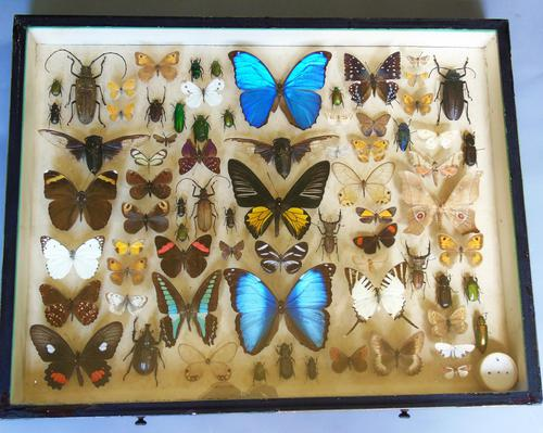 Antique Specimen Butterfly & Insect Case (1 of 8)
