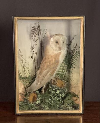 Decorative Cased Taxidermy Barn Owl (1 of 10)