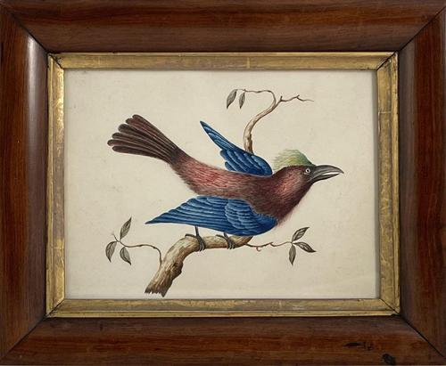 Watercolour of Bird (1 of 4)