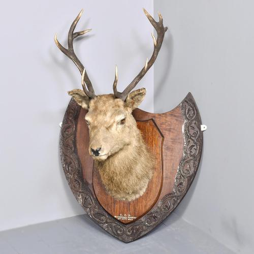 Taxidermist Deer Head (1 of 4)