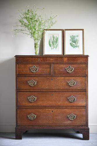Georgian Oak Chest of Drawers (1 of 12)