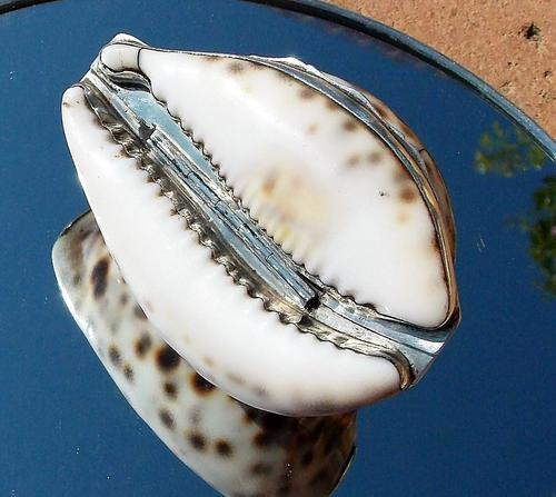 Rare Georgian Solid Silver Mounted Scottish Tiger Cowrie Shell Snuff Box (1 of 11)