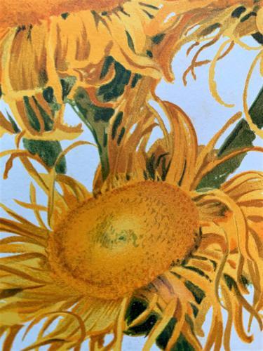 Pure Sunshine 'Inula Roylei' Chromolithograph 1903 (1 of 4)