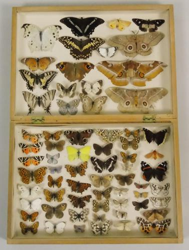 Antique Butterfly & Moth Cased Specimen Collection (1 of 8)