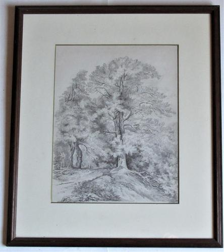 Emma Weeds Bacon, Suffolk, Study of an Oak Tree, Pencil, Initialled & Dated 1822, Framed (1 of 8)