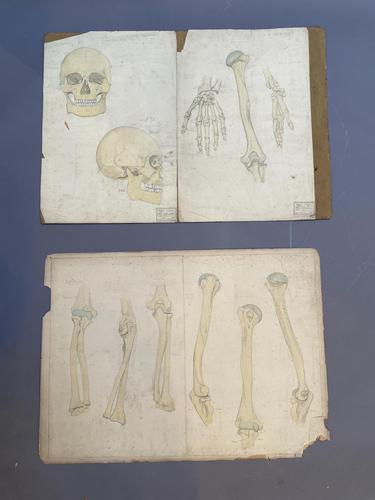 Anatomical Studies (1 of 11)