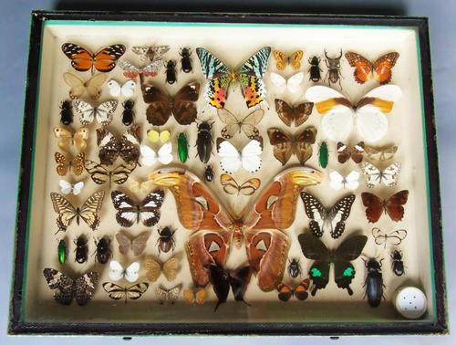 Large Antique Specimen Butterfly & Insect Case (1 of 10)