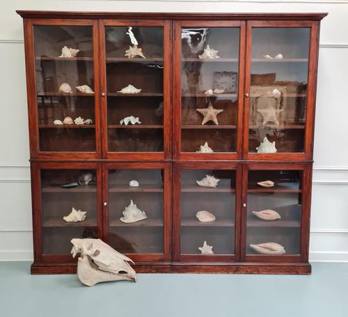 Large Antique Museum Cabinet c.1900 (1 of 7)
