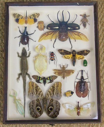 Fabulous Antique Collection Cased Insect & Butterfly Specimens (1 of 7)