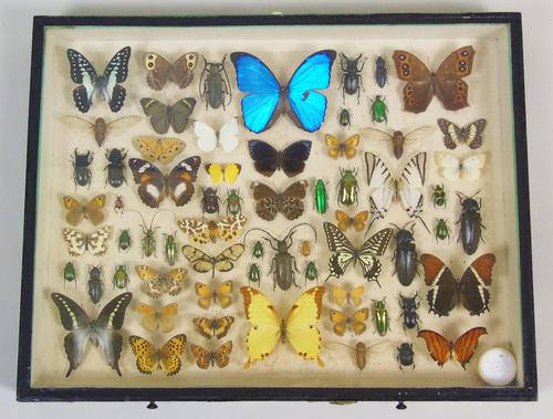 Antique Butterfly and Insect Specimens Collection (1 of 8)