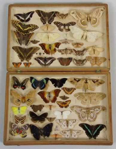 Antique Butterfly and Moth Cased Specimen Collection (1 of 7)