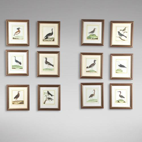 Set of Twelve Bird Hand Coloured Engravings by Martinet (1 of 5)