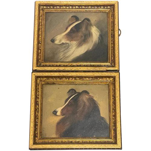Pair of Scottish 19th Century Oil Paintings Rough Collie Dog Portraits After George Washington Brownlow (1 of 49)