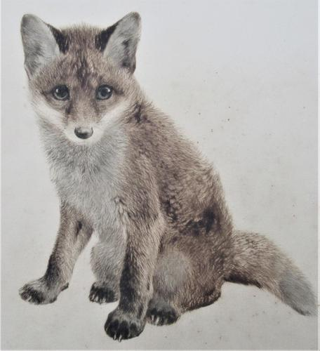 Original print, drypoint engraving, Study of a Fox Cub, indistinctly signed, c1930 (1 of 6)