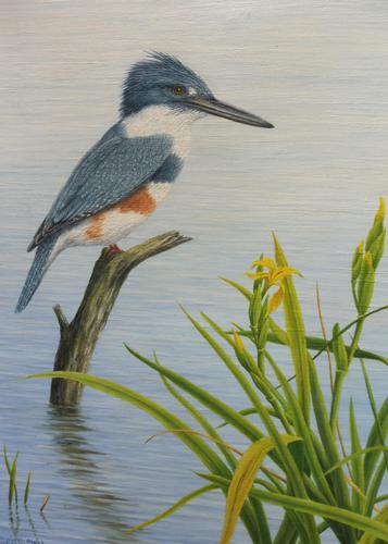 Oil on Canvas Study of a Kingfisher Listed Artist Geoffrey Campbell Black (1 of 10)