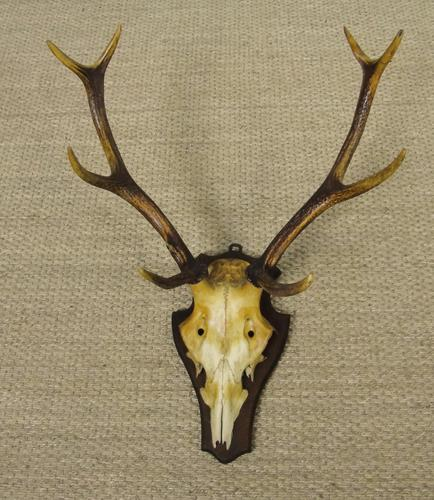 19th Century Antique Antlers on Shield (1 of 5)