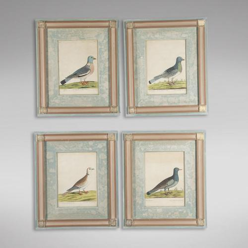 Set of Four Dove Coloured Engravings by Eleazar Albin 18thc (1 of 5)
