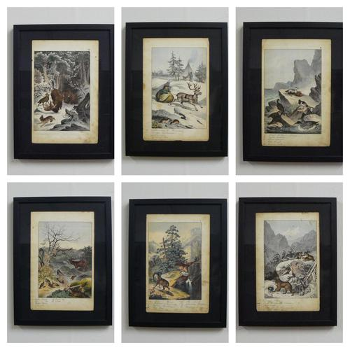 6 Framed Animal Coloured Pictures Plates C1877 Sketches From Nature - N Europe & Lapland (1 of 11)