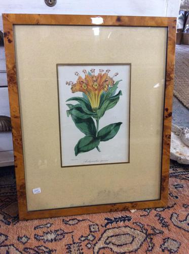 Two Botanical Paintings X2 (1 of 2)