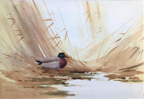 Original Watercolour 'a Mallard among the reeds' by Arthur Gee 1934-2011. Signed. (1 of 1)