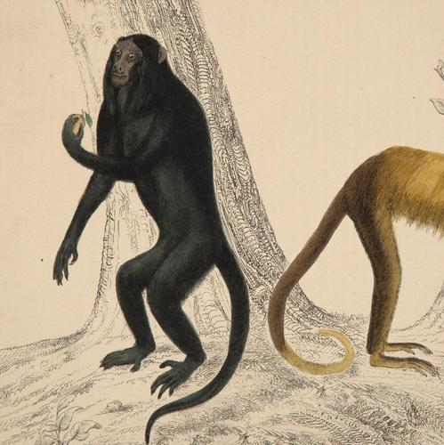 Hand Coloured 'Monkeys' Lithograph. Goldsmith 1875 (1 of 4)
