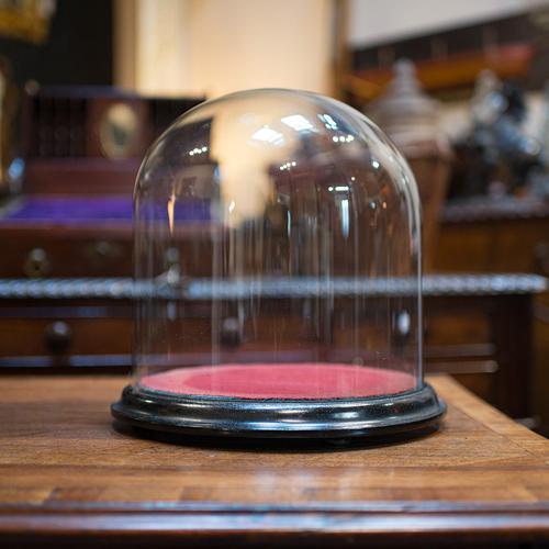 Antique Taxidermy Display Dome, Glass, Showcase, Davis & Co, Bristol, Victorian (1 of 9)