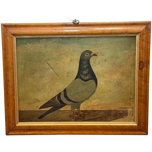 Decorative Sporting Early 20th Century Oil Canvas Painting English Racing Pigeon (1 of 35)