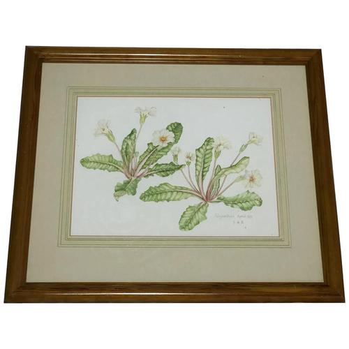 Watercolour Plant Study Botanical Polyanthus after Charles Darwin (1 of 12)