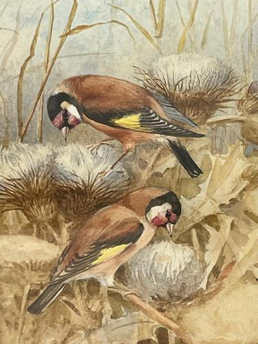 Ornithological Watercolour Finches Birds Study by Florence Barlow Royal Doulton (1 of 40)