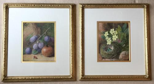 Charles Henry Slater Pair of Watercolours 'Plums, Pomegranate, Primroses & Birds Nest' (1 of 3)