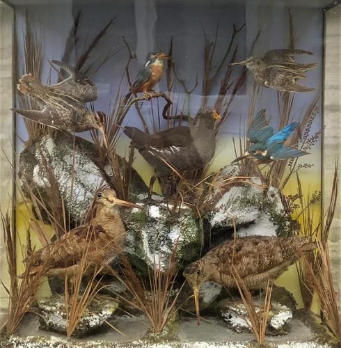 Taxidermy Edwardian Case of 7 Birds Inc: Kingfisher, Snipe, Moorhen & Woodcock (1 of 15)