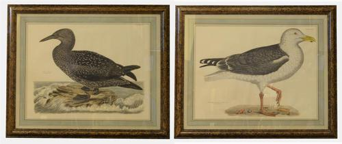 Pair of Coloured Etchings of British Birds (1 of 1)